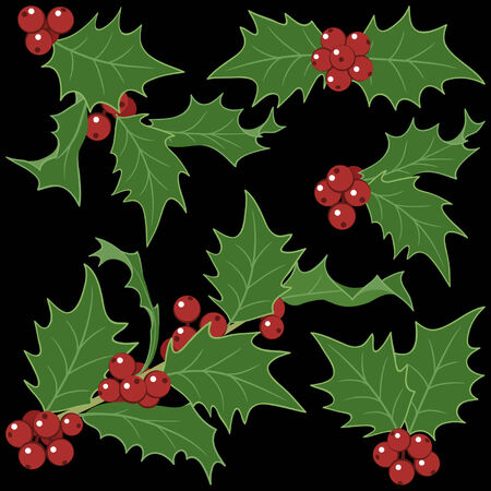 sprigs: Holly sprigs for Christmas decorations  isolated on black