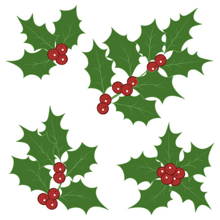 Holly sprigs for christmas decorations Vector