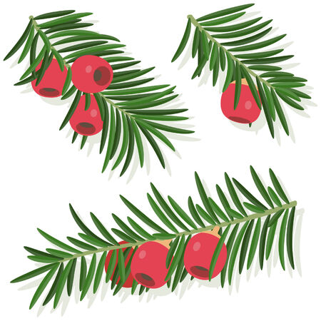 yew: Yew sprigs with red berries Illustration