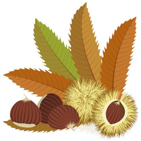 castaÑas: Castañas dulces con las hojas y cáscaras espinosos sobre fondo blanco