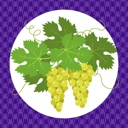 violet background: White grapes with leaves on violet background Vettoriali