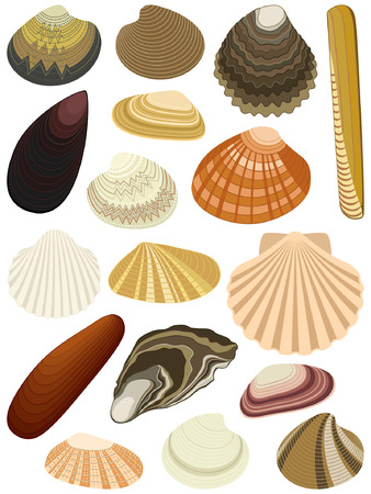 shuck: Collection of bivalve seashells isolated on white background