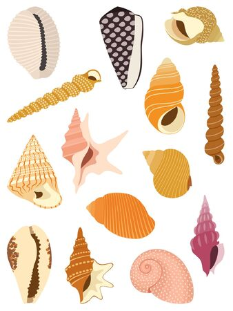 mollusc: Sea snail shells isolated on white background