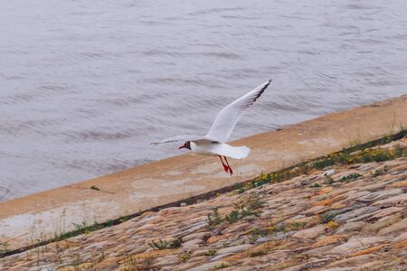 a seagull takes off from a stone pier, spreading its wings.