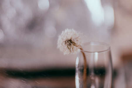 Glass wineglass with splashing water and dandelion on silvery background. Minimal color concept. Copy space