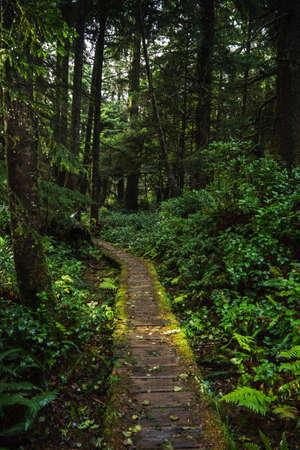 Forested trail in Tofino, British Columbia