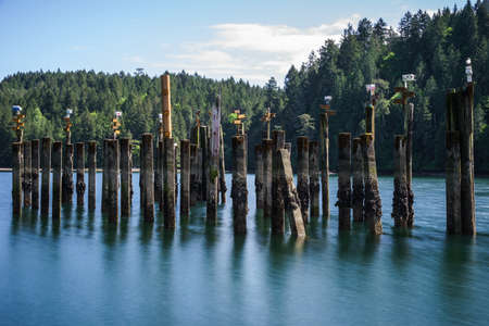pilings: Bird Houses atop cement pilings at Tod Inlet