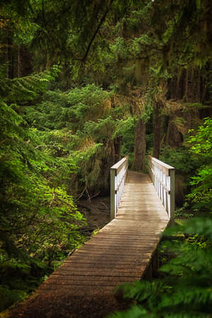 vancouver island: A pedestrian bridge on the trail to San Josef Bay in Cape Scott Provincial Park in Norther Vancouver Island, British Columbia. Stock Photo