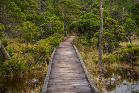 bog: Shorepine Bog Trail  Vancouver Island - Canada Stock Photo
