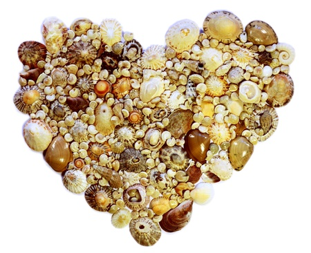 Shells arranged in the shape of a heart on a white background  Stock Photo
