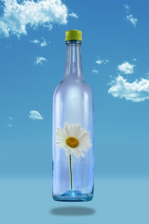 White daffodil enclosed in a floating tall glass bottle on a blue sky  Stock Photo