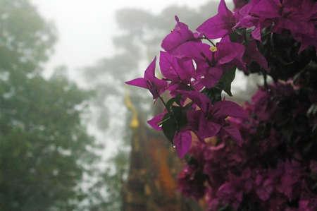 doi: Wat Doi Sutep, Chiang Mai, Thailand