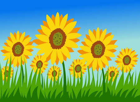 Picturesque field of sunflowers stock illustration Иллюстрация