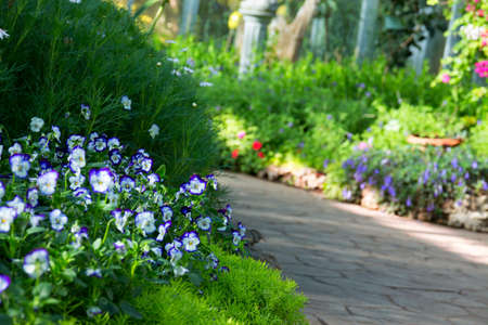 violation: close up of floral border consisting of blue viola flowers and fresh green sedum alone the asphalt tile road selective focus blurred park on background