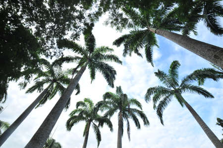 scorching: Palm trees in scorching day
