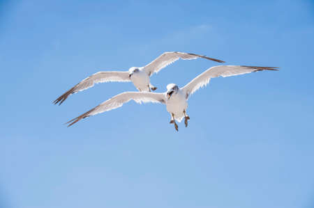 Flying seagulls against the blue sky background