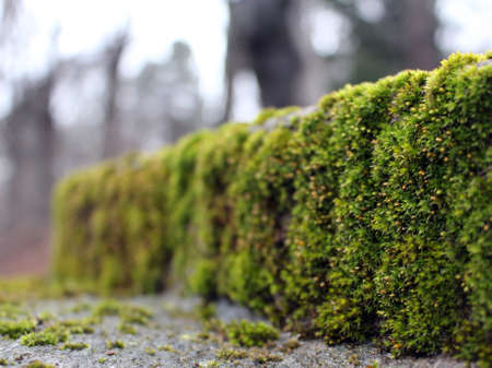 are taken: Moss covered stone the front is focused and continues until it gets unsharp the picture was taken at Friedensengel in Munich Bavaria on 28th February 2015