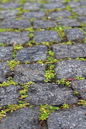 flagging: Green moss growing between flagging Stock Photo