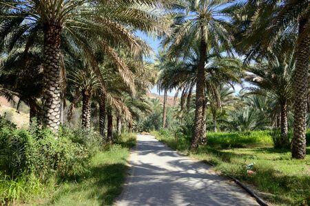 Oasis, Birkat al Mouz, Oman