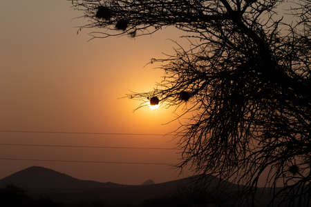 silhouette of tree with weaver bird nests. High quality photo