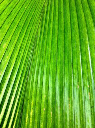 detail: Green leaf texture background Stock Photo