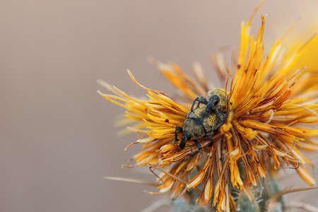 weevils: Loving weevils