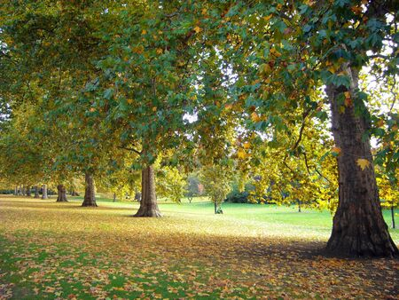 Beautiful park in bright autumnal colors photo