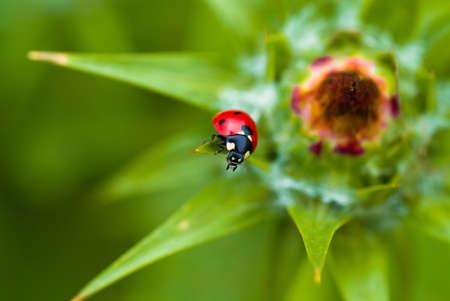 ledybird on the plant photo