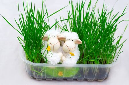 easter decoration with two lamb Stock Photo