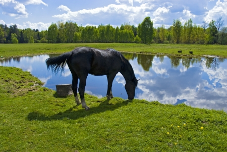 Beautiful spring view of the wood with a horse drinking water photo