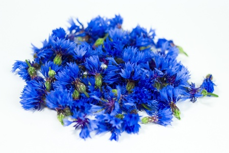 cornflower isolated on a white Stock Photo - 11944638