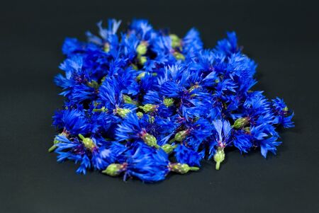 cornflower: cornflower on a black Stock Photo