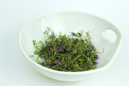 Herbal medicine,forest thyme on white background  Stock Photo