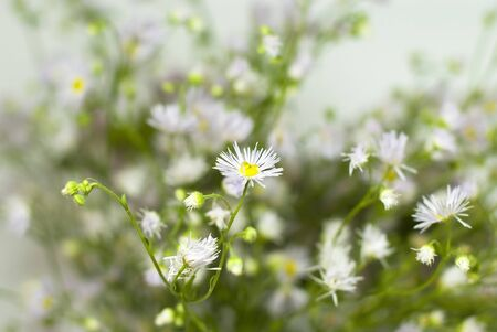 Bouquet of wild flowers on a white background Stock Photo - 12249460
