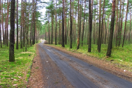Road through wood photo