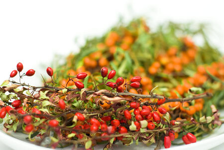bacca: fresh buckthorn with barberry on a white background