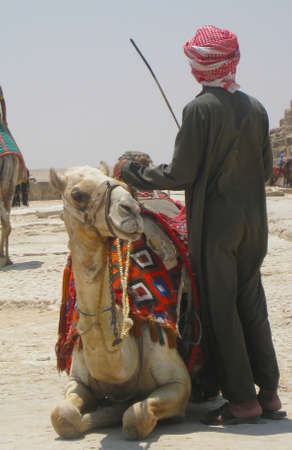 Man with camel in Giza photo