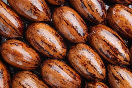 whole pecans: Close up of a group of whole pecans.