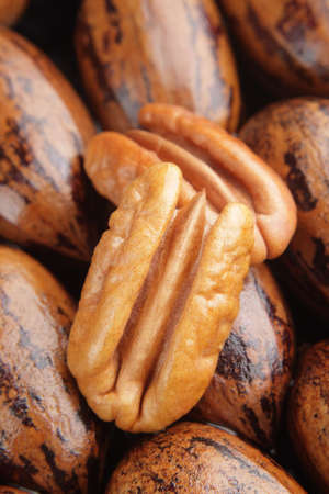 whole pecans: Pecan halves on a group of whole pecans.
