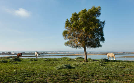 Herd of horses eating grass near green tree against blue sky in summer in marshes of Barbate in Cadiz coast, Andalusia, Spain