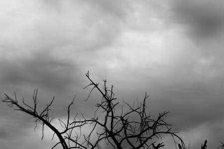 arboles secos: �rboles muertos abstracta Foto de archivo
