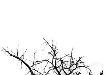 arboles secos: Árboles muertos abstracta Foto de archivo