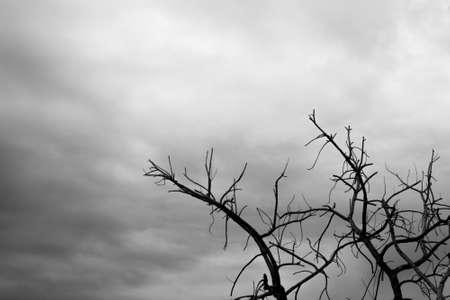 arboles secos: �rboles muertos antes de la tormenta Foto de archivo