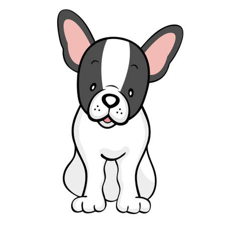pied: Black pied French bulldog isolated