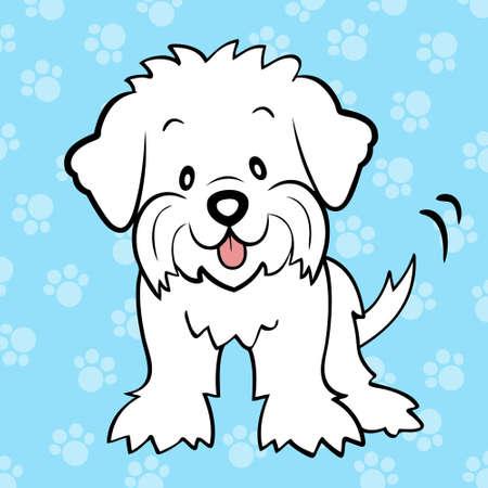 frise: Puppy cut maltese