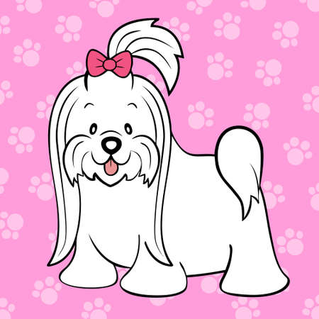 maltese dog: Long hair maltese
