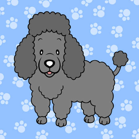 Black Poodle isolated Vector