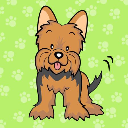 yorkshire: Brown Yorkshire terrier puppy