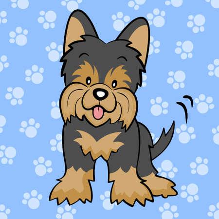 yorkshire terrier: Black Yorkshire terrier puppy