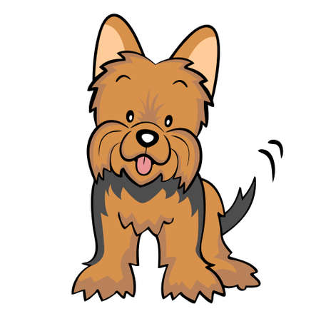 Brown Yorkshire terrier puppy isolated Vector